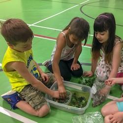 Students from Cochrane Public School build fish shoals.
