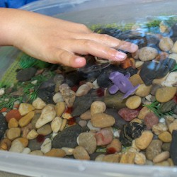 Students creating a fish spawning shoal.